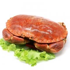 鲜活海鲜  面包蟹 1斤