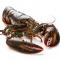 鲜活海鲜 波士顿龙虾 1斤