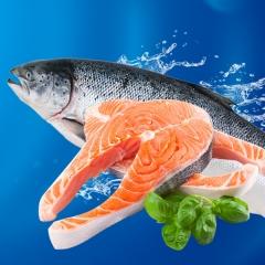 鲜活海鲜  三文鱼 1斤