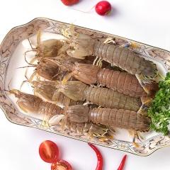 鲜活海鲜 皮皮虾 1斤