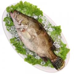 鲜活海鲜 桂鱼 1斤
